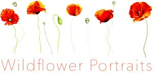 Wildflower Portraits Logo Crescent Head photographer